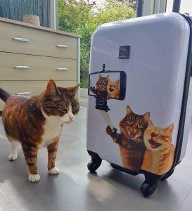 Saxoline koffer