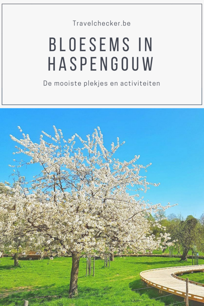 bloesems in Haspengouw