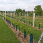 belgische wijn hoeselt