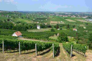 de mooiste wijnstreken